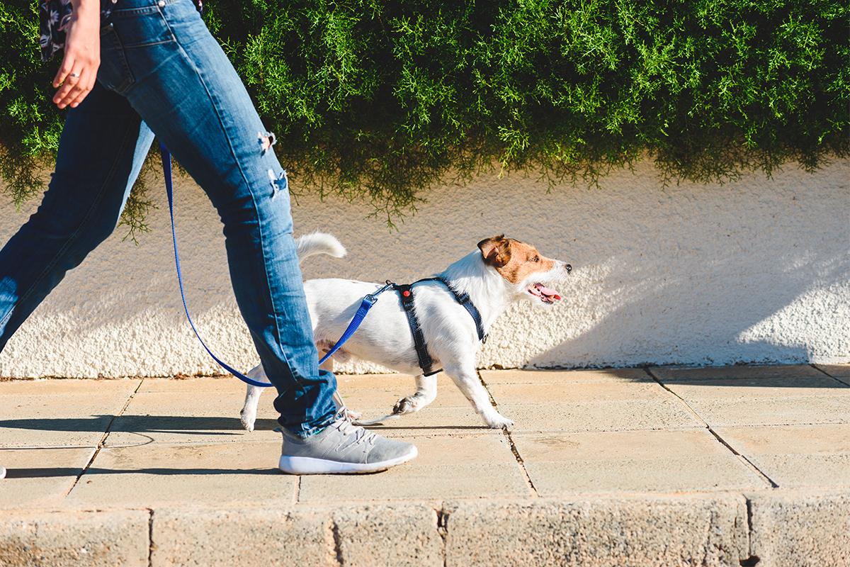 Far stare buono il cane quando prepari la pappa: dritte e consigli per educare Fido