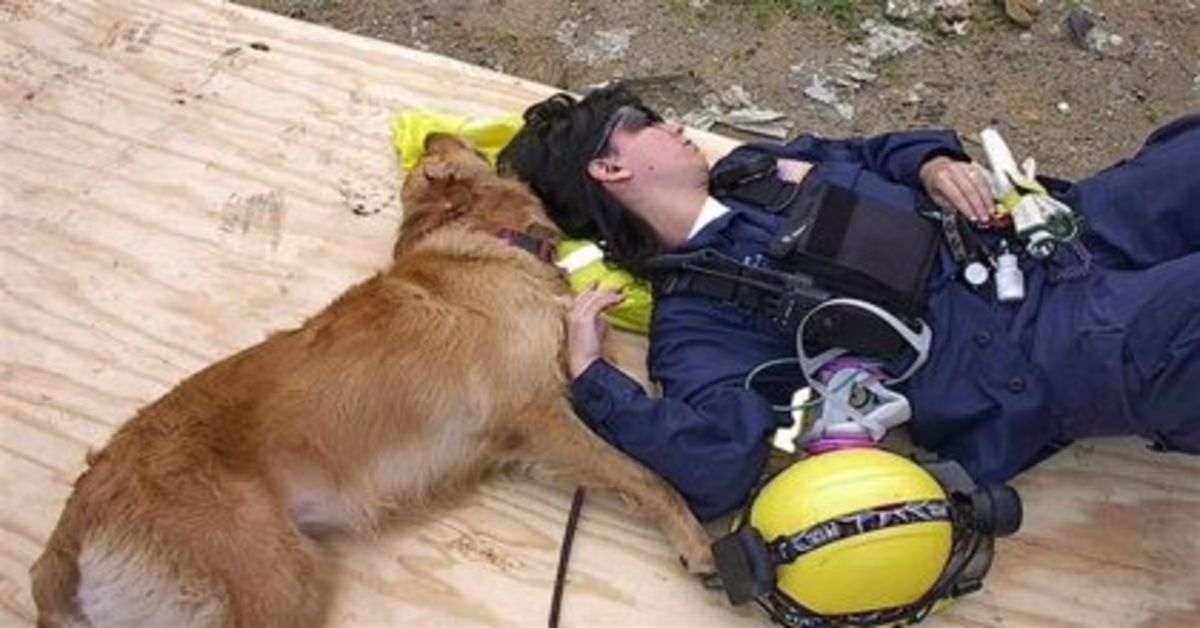 La storia di Bretagne, una coraggiosa Golden Retriever che aveva prestato servizio durante la tragedia dell'11 settembre (VIDEO)