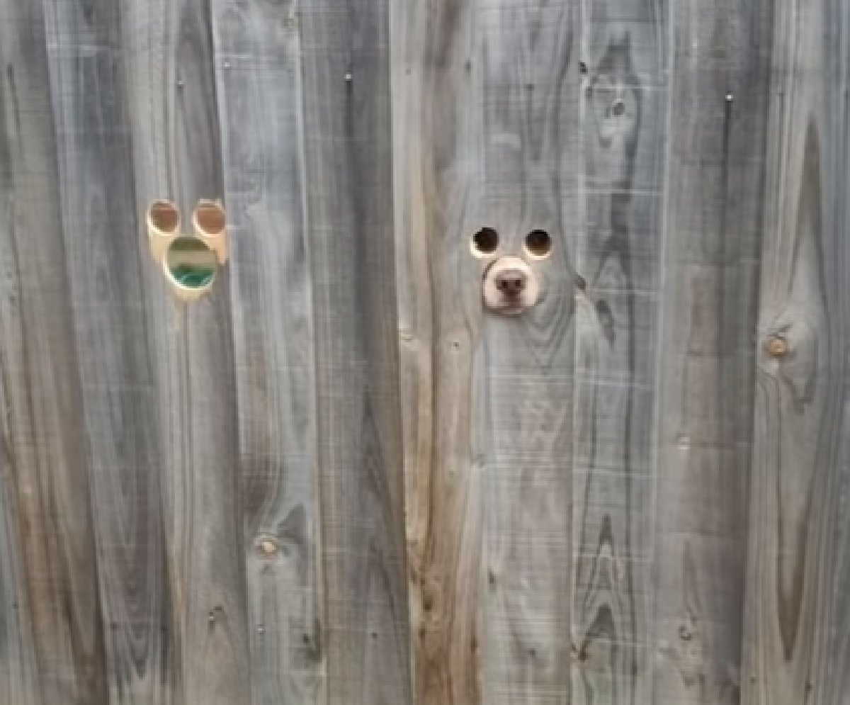 cuccioli cane gioia fori staccionata