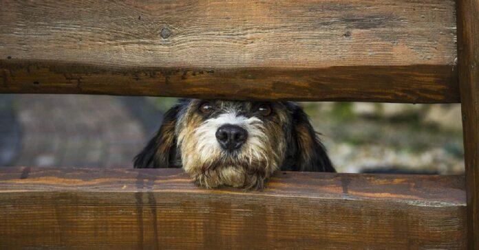 i cuccioli di cane si affacciano buchi staccionata video