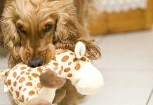 il cane ha troppi giocattoli