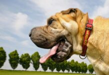 cane felice al parco