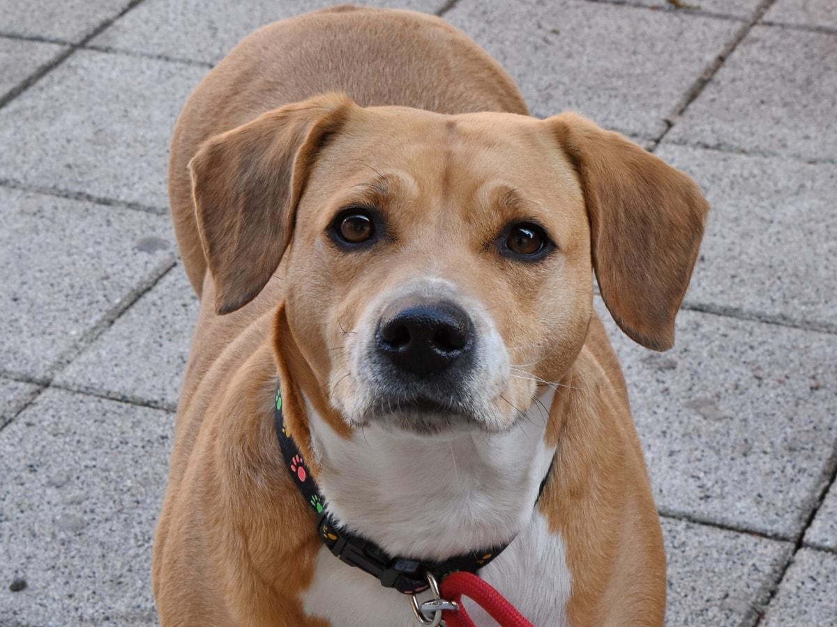 cane con muso contrariato