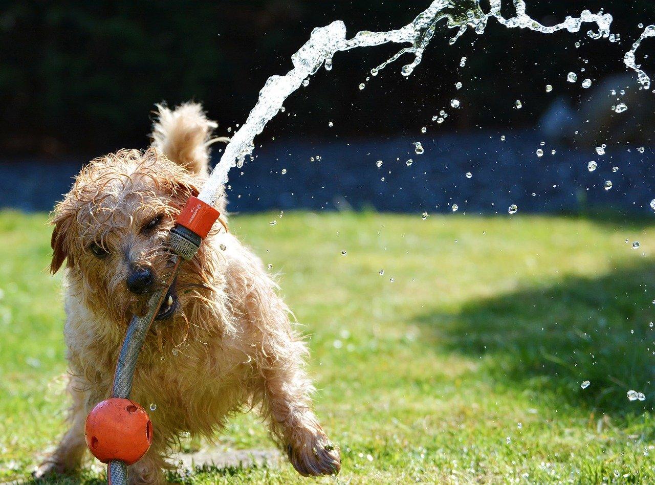 cane in giardino felice