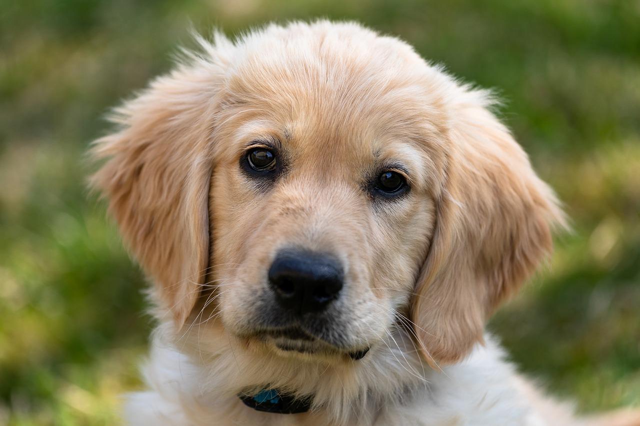 cane occhi tenerissimi