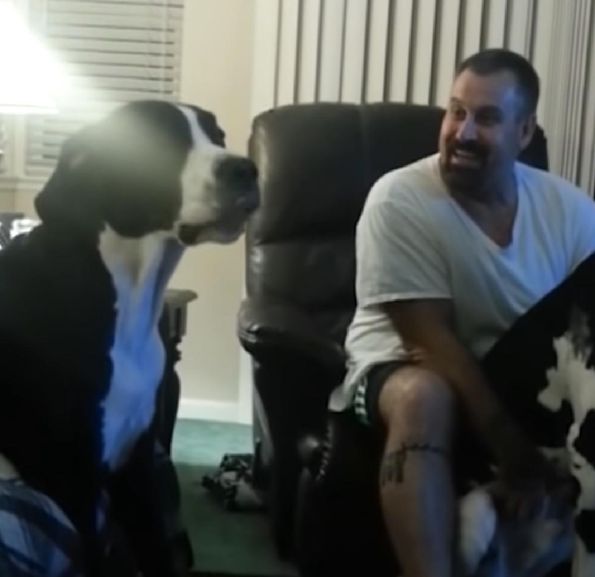 Il cucciolo Alano vuole le coccole tutte per lui, nel video manifesta tutta la sua gelosia