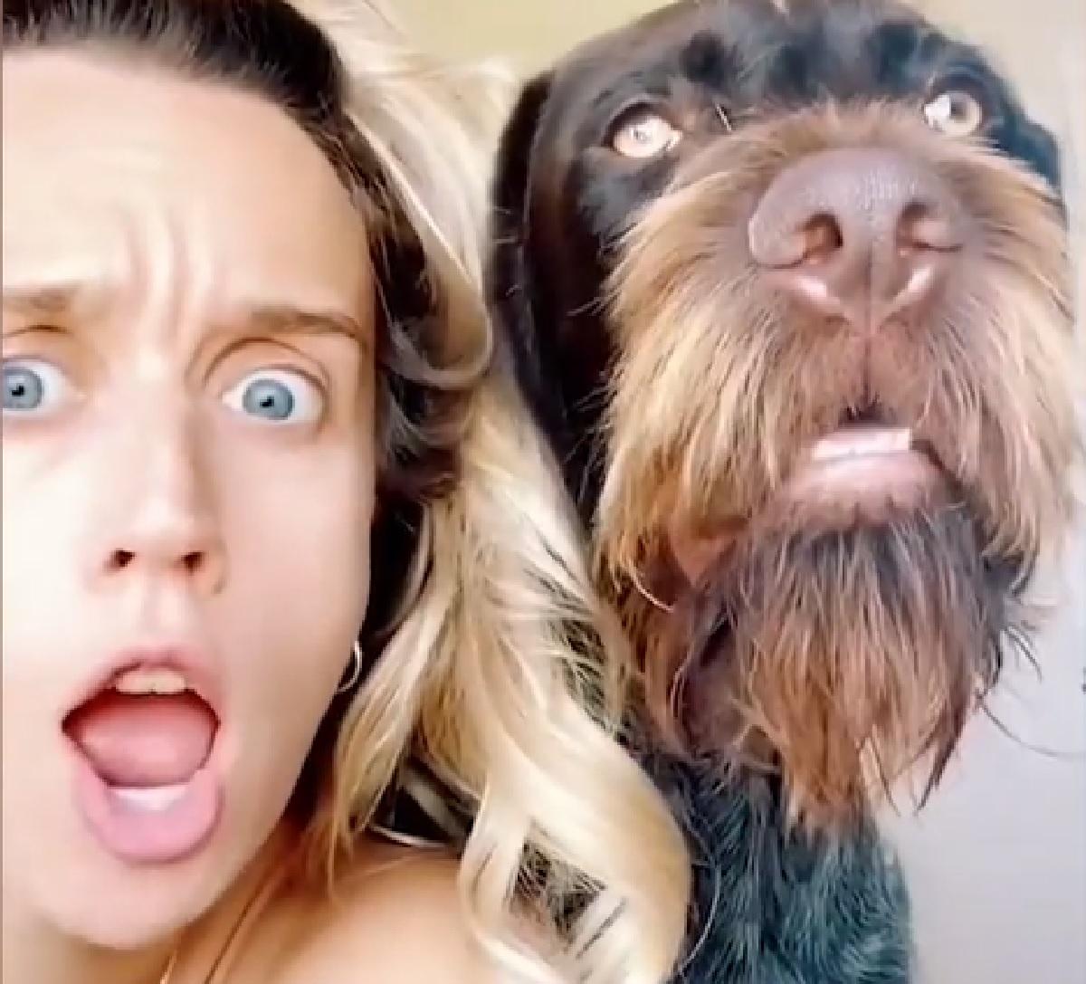 max cucciolo bracco tedesco issy