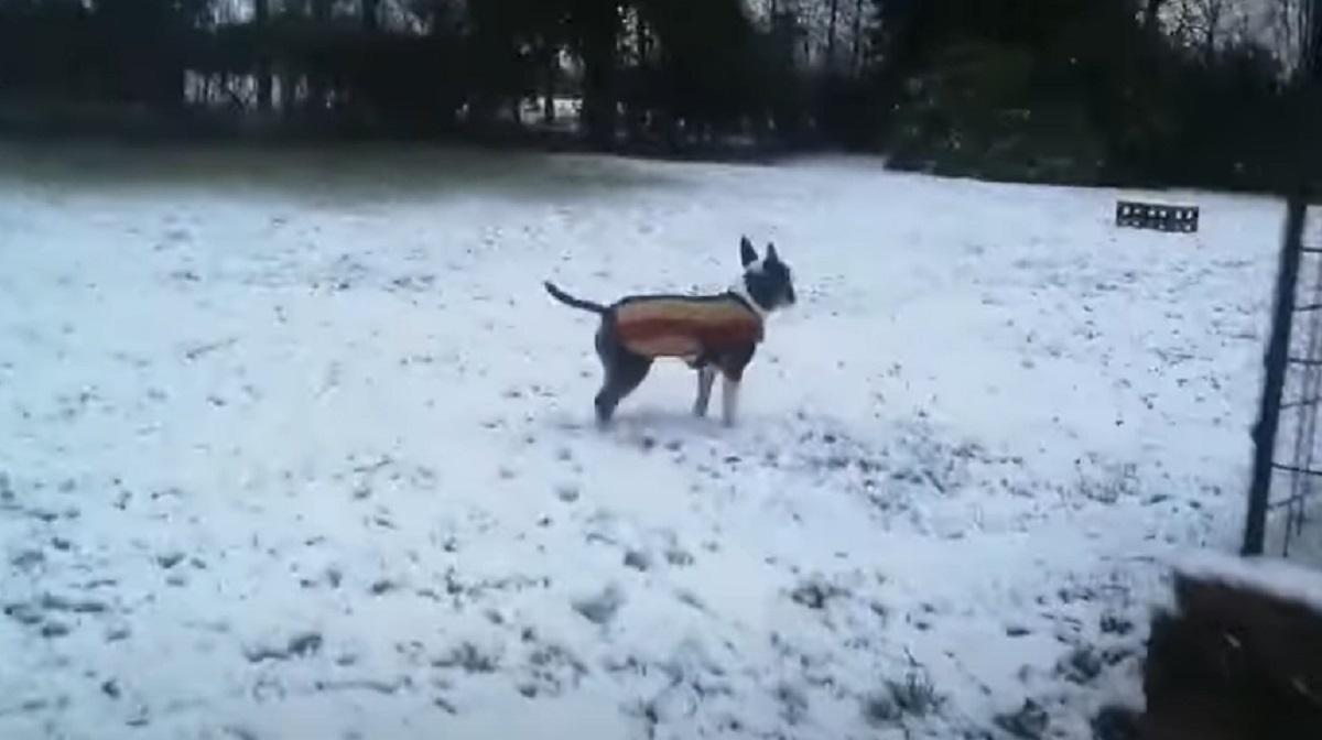 felice cucciolo neve