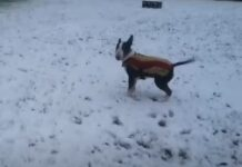 la prima neve cucciolo