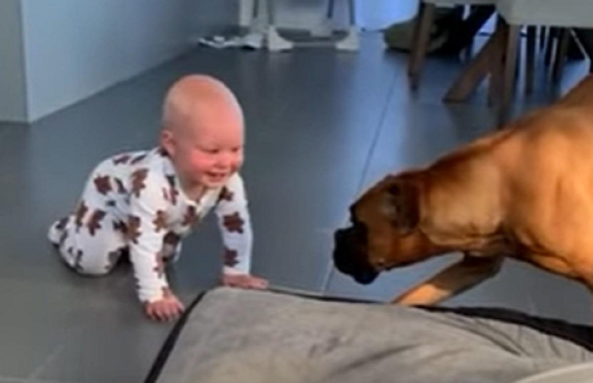 Il cucciolo di Boxer ed il neonato si divertono come matti, la loro simpatia nel video è contagiosa