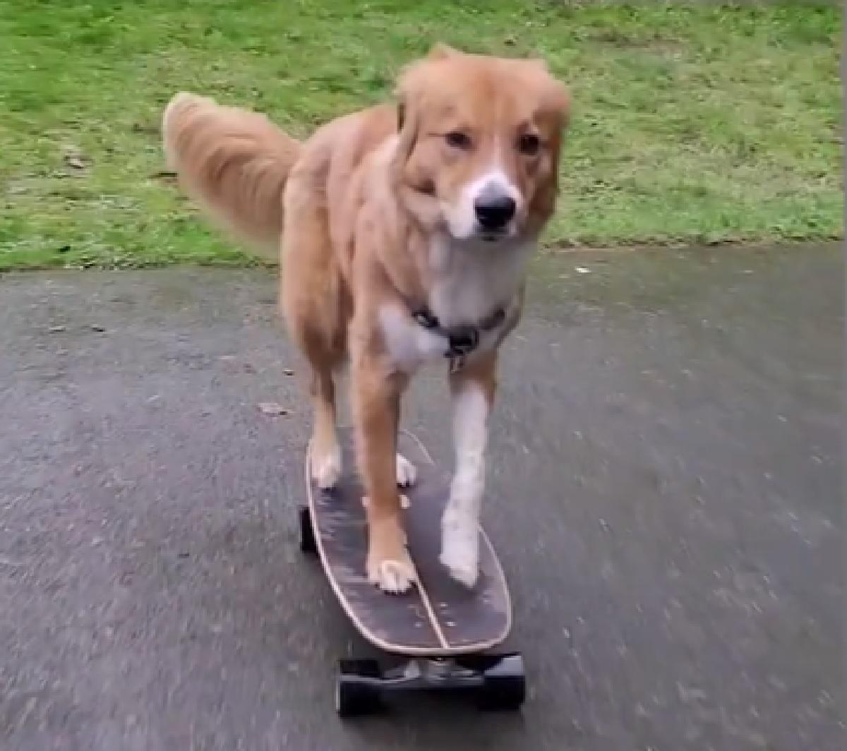 darrell cucciolo maestro skate