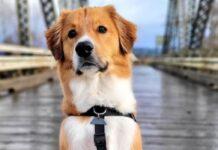 cucciolo cane ama skate in video