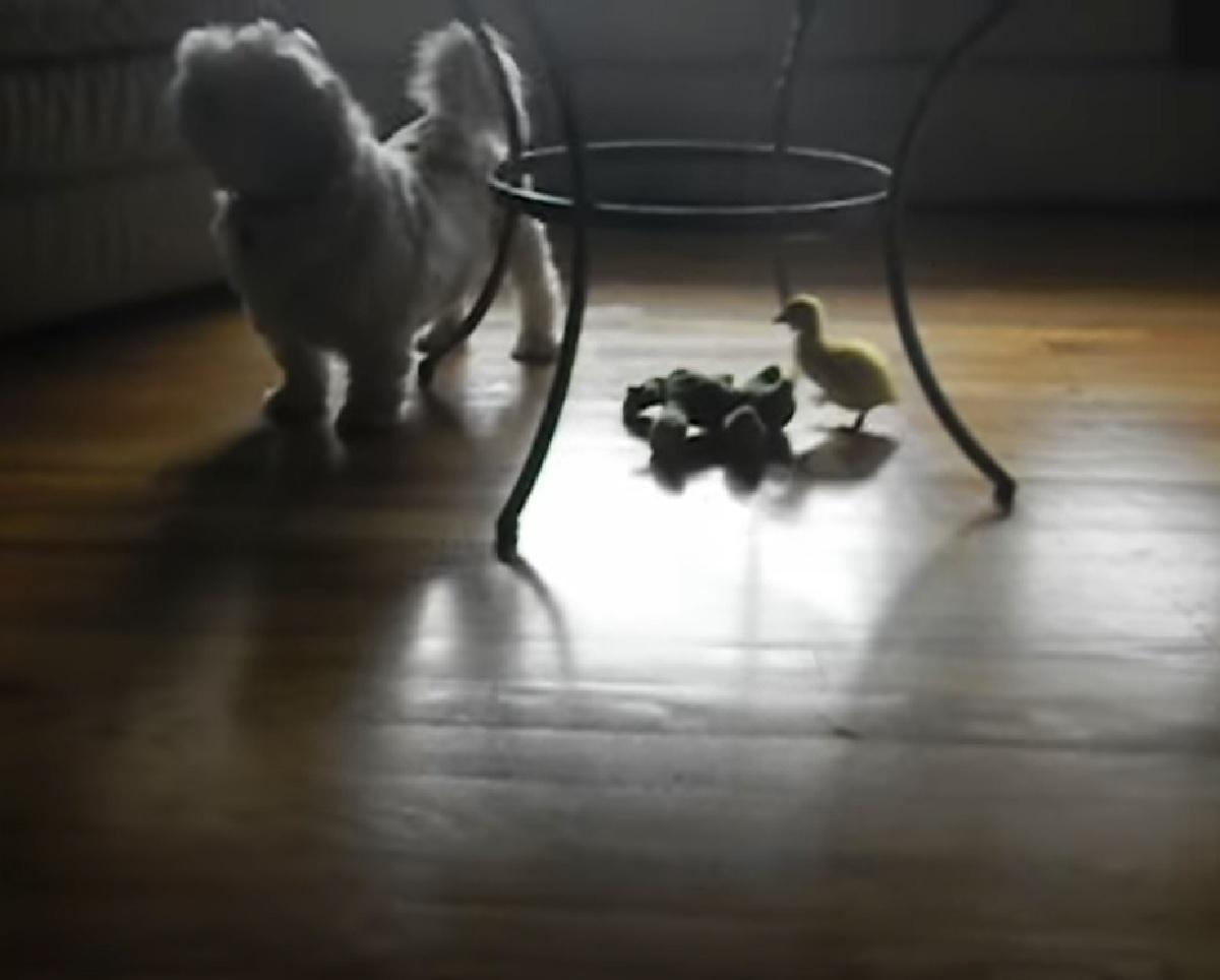 cucciolo cane gioca con proprietaria
