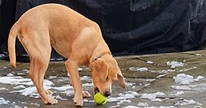 cucciolo pallina prendere
