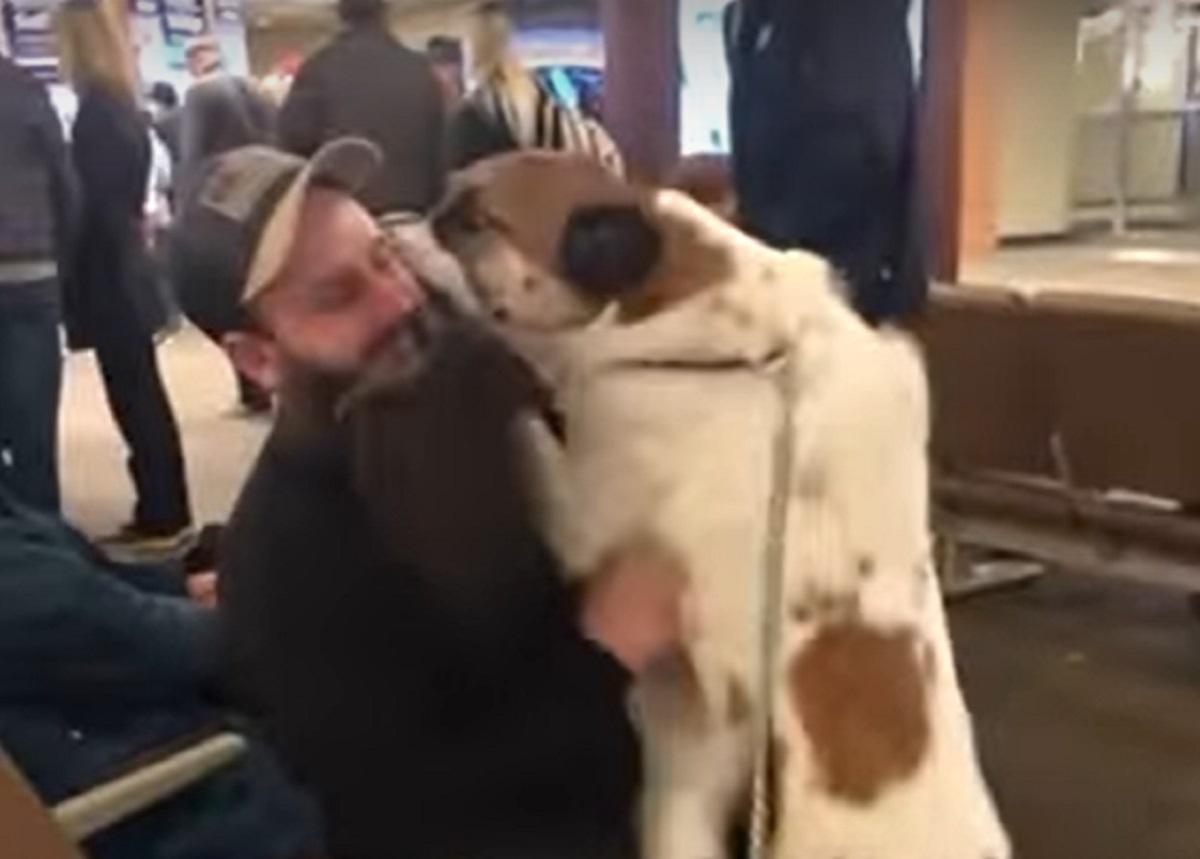 Il cucciolo di cane rincontra il tanto atteso papà in aeroporto, il video è di una tenerezza unica