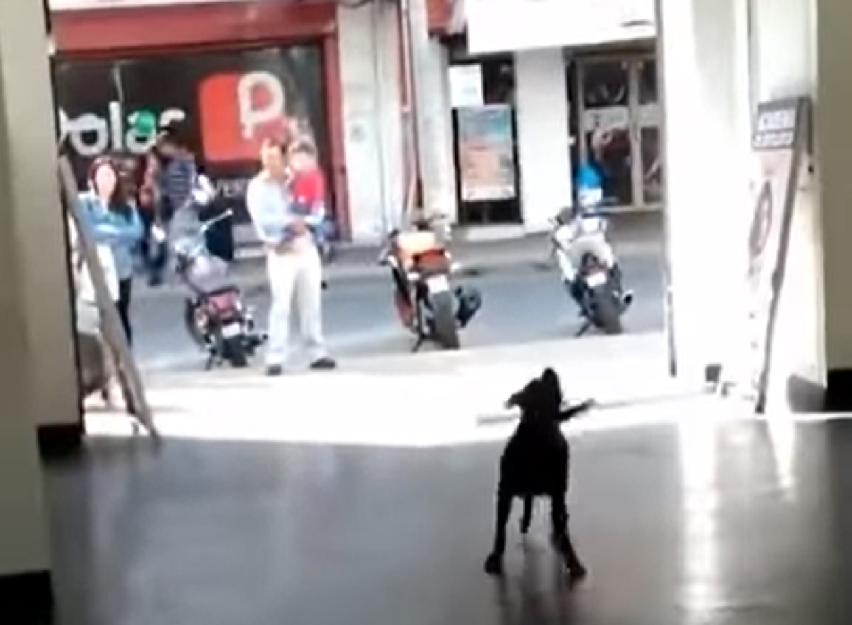 Il cucciolo di cane stupisce tutti per strada quando inizia a giocare col palloncino, la sua abilità in video