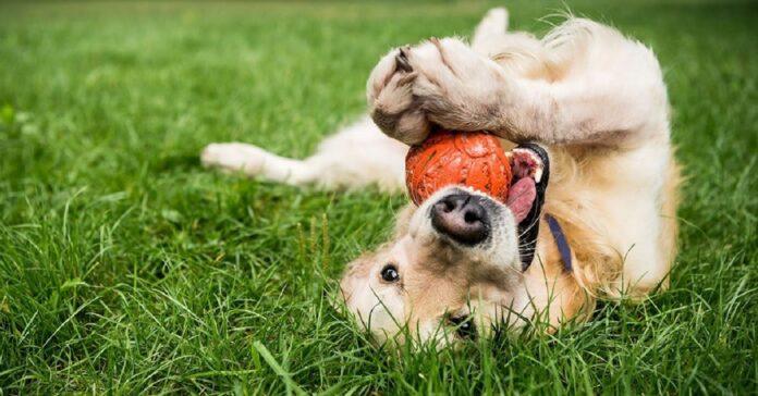 cucciolo di cane tutti quando gioca palloncino strada video