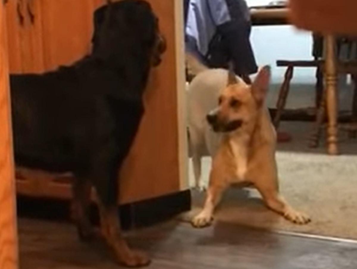 cagnolini amici giocare