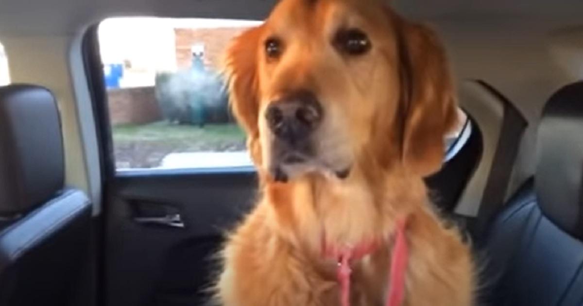 cane cucciolo paura