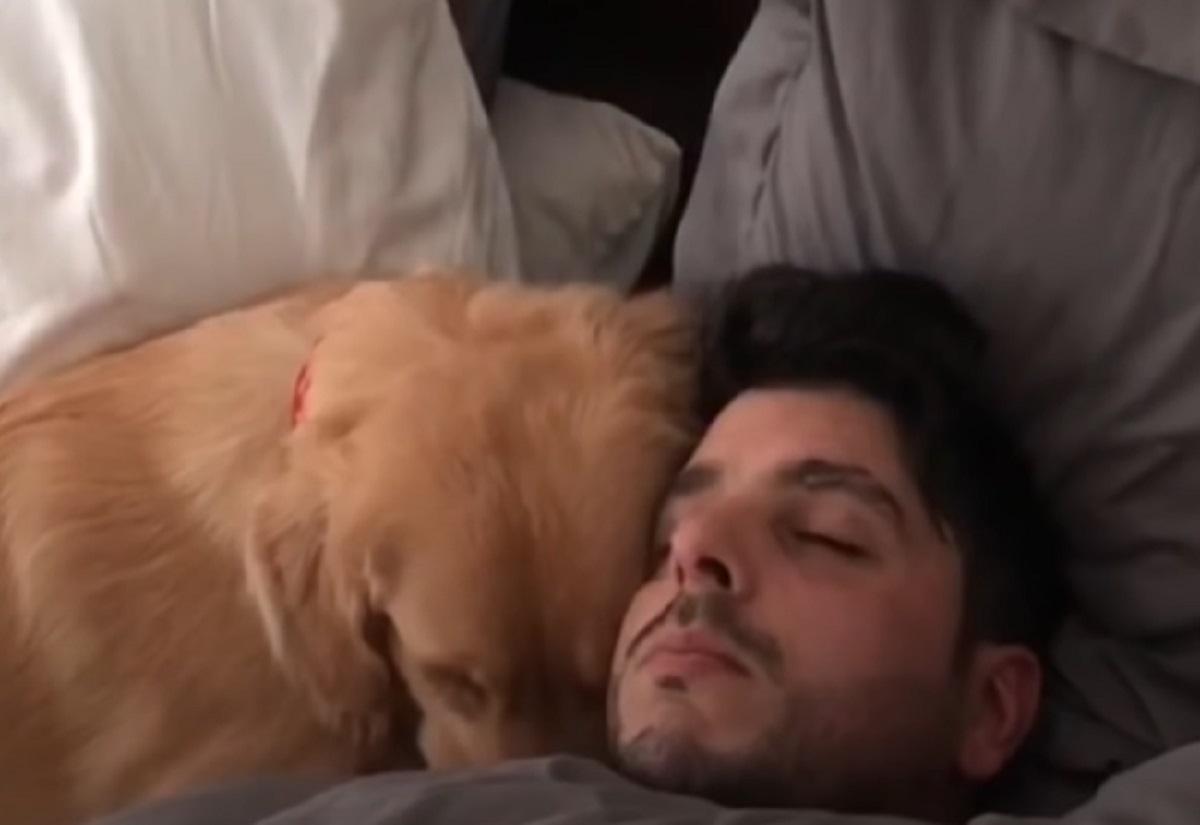 Il cucciolo di Golden Retriever cerca di svegliare papà, nel video, però, si verifica una scena bizzarra