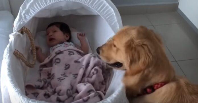 cucciolo guarda il neonato