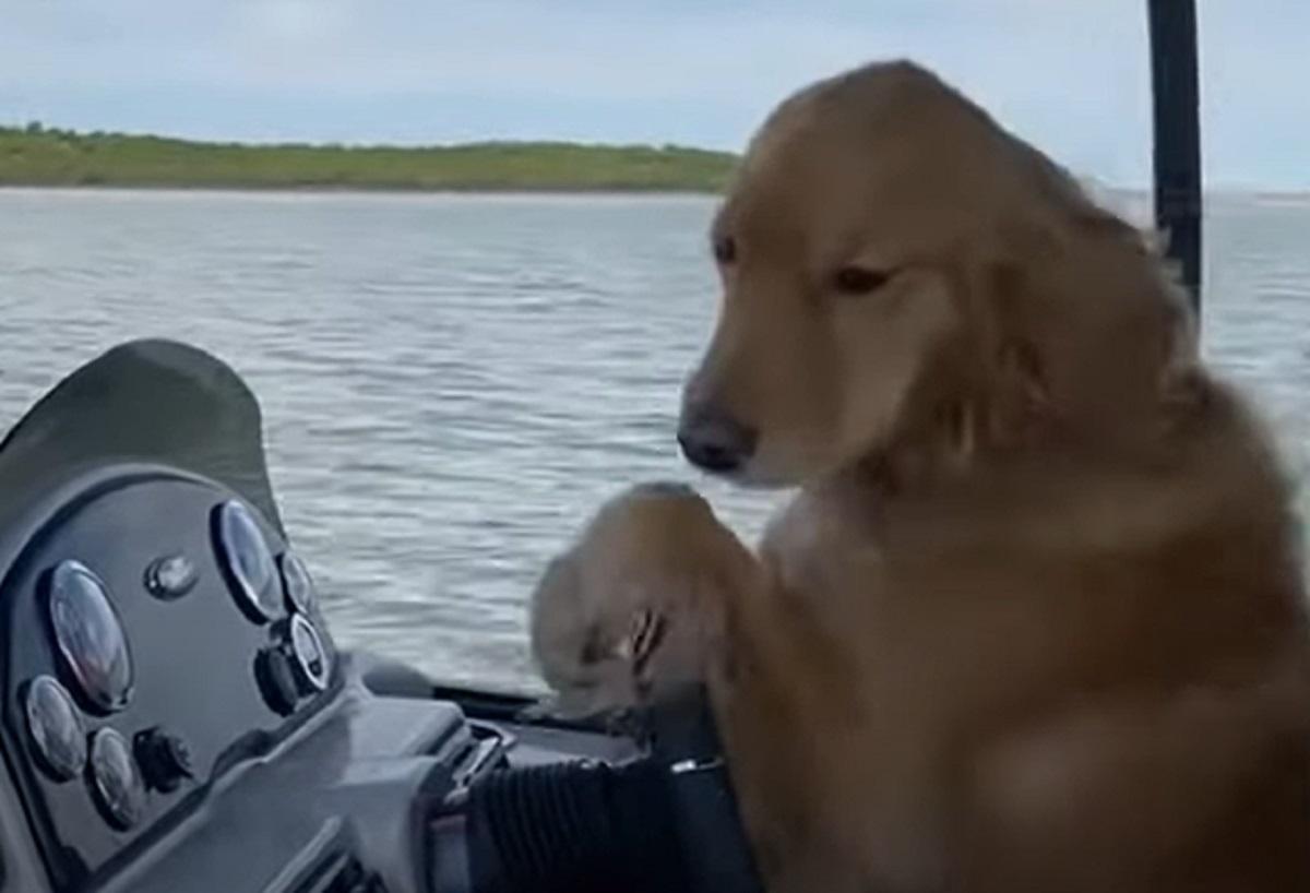 Il cucciolo di Golden Retriever si mette alla guida di una barca, il video è sulla bocca di tutti gli utenti