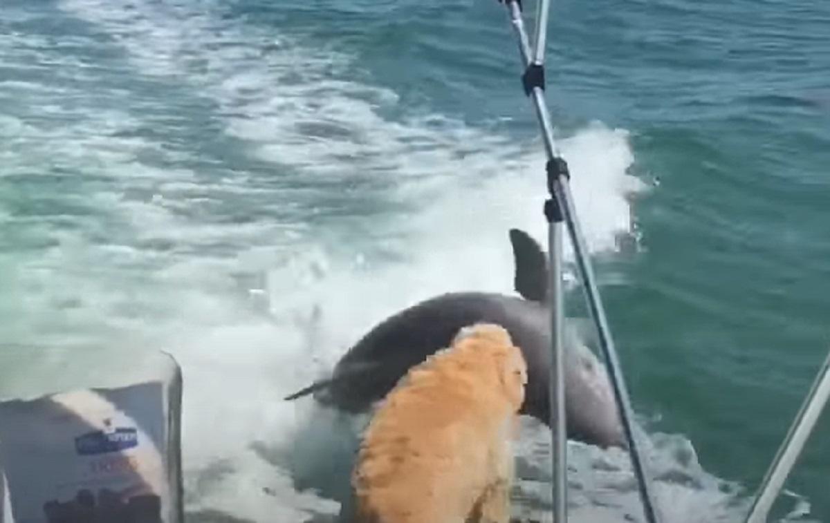 felice cucciolo delfino