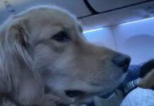aereo viaggio cucciolo