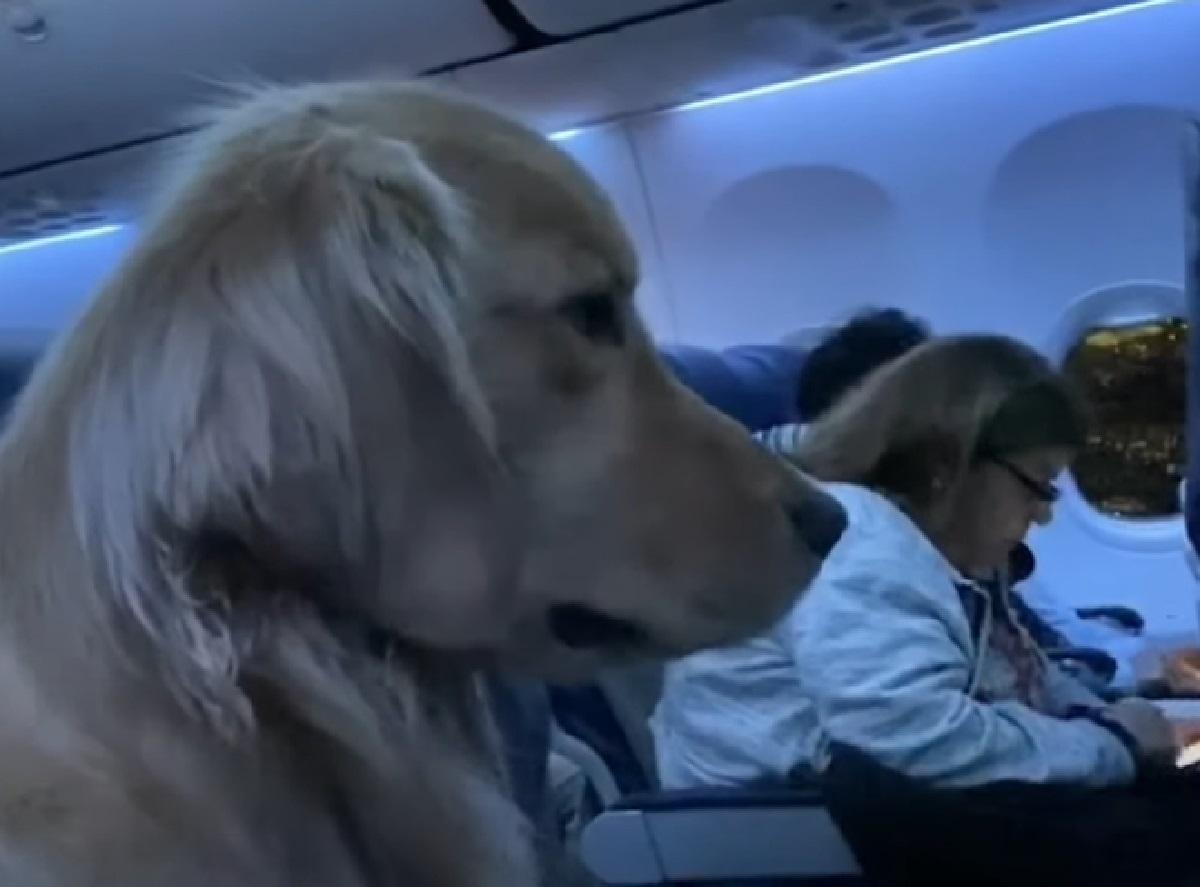 cucciolo volo viaggia