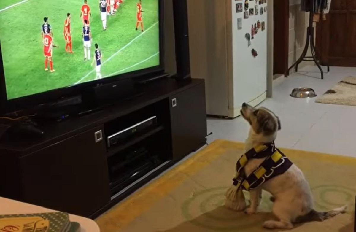 cucciolo jack russell maylo felicità gol