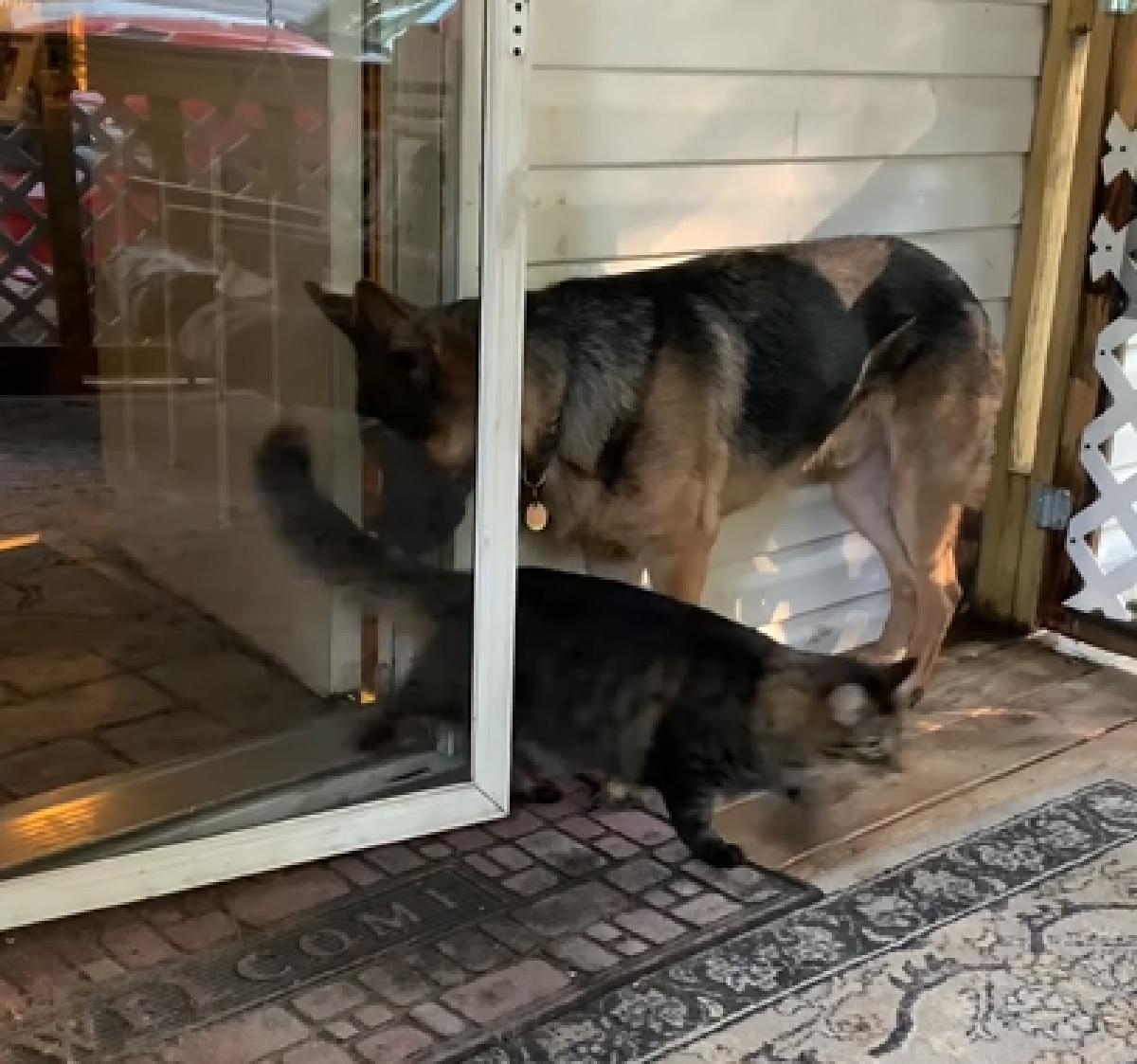 zeus cucciolo pastore tedesco suggerimento