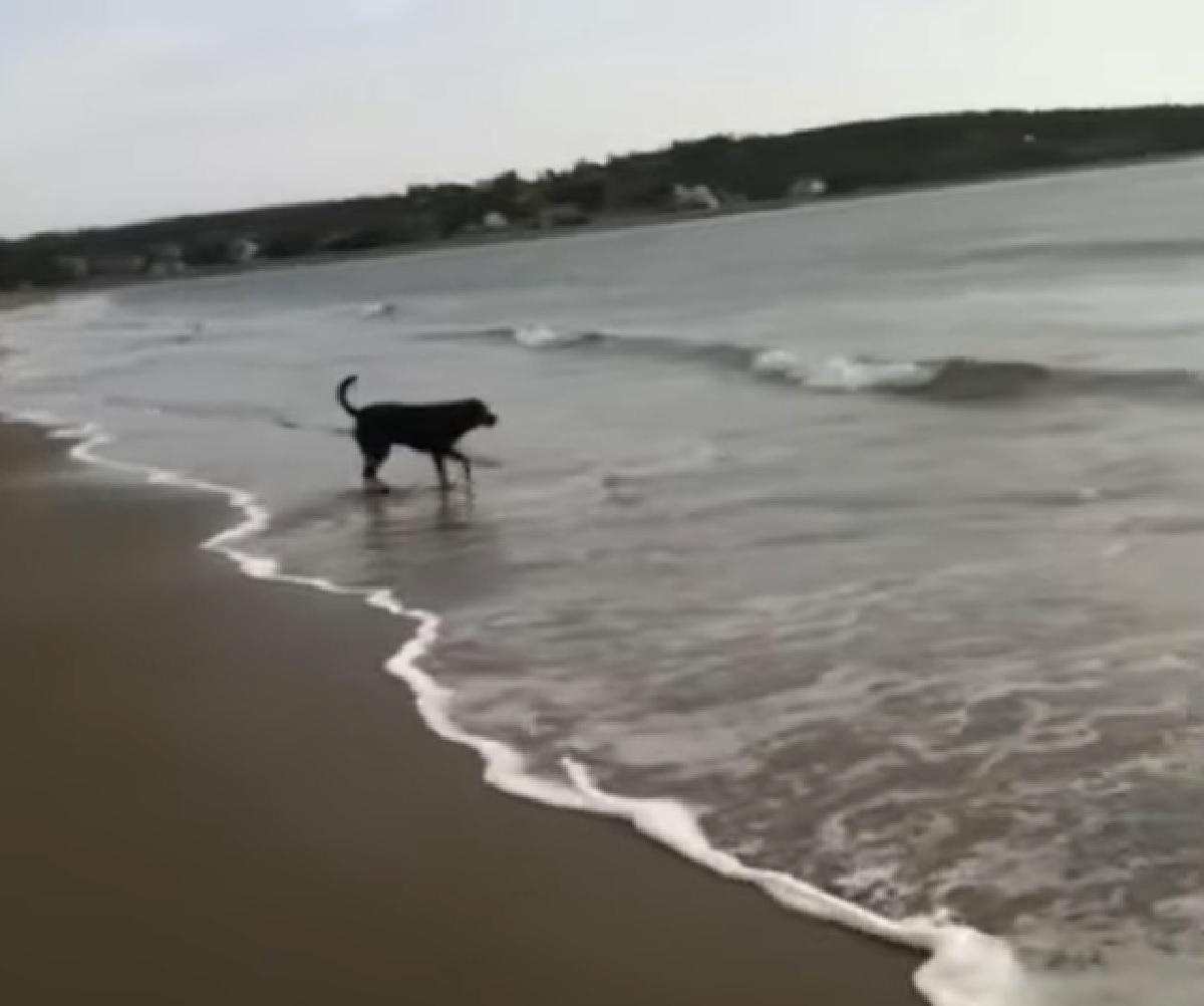 Il cucciolo Rottweiler non gradisce le onde del mare, tutta la sua diffidenza in video