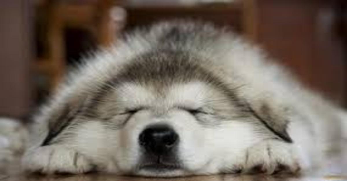 Svelati tutti i segreti che puoi conoscere se guardi il tuo cane che dorme