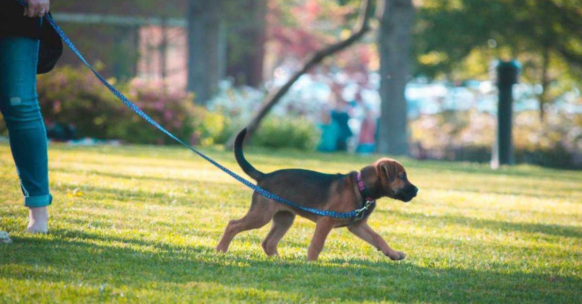 Ingresso al cane nei luoghi pubblici in Italia: che cosa bisogna sapere