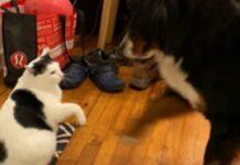 giocare gatto cucciola