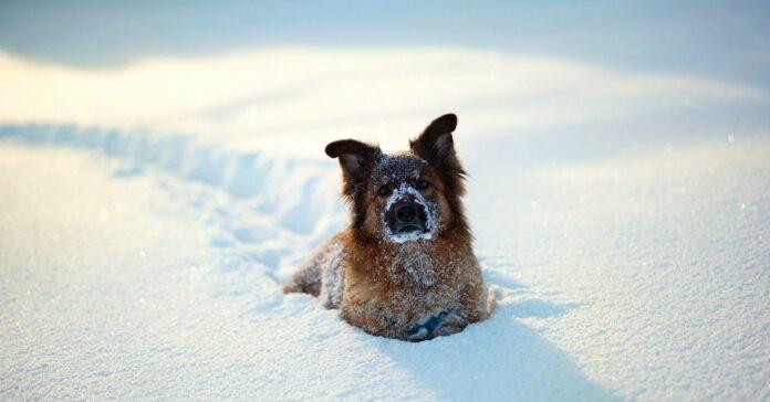 cucciola cane esce porta per gettarsi neve video
