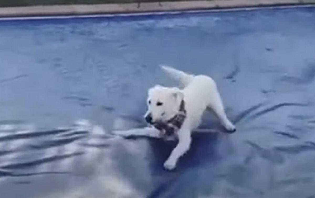 La cucciola di cane ha una reazione inattesa alla vista del telo per la piscina, il video è tutto da ridere