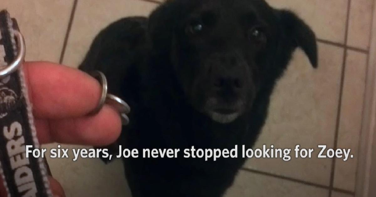 La cucciola di cane riabbraccia il papà dopo un'eternità, il video vi farà emozionare