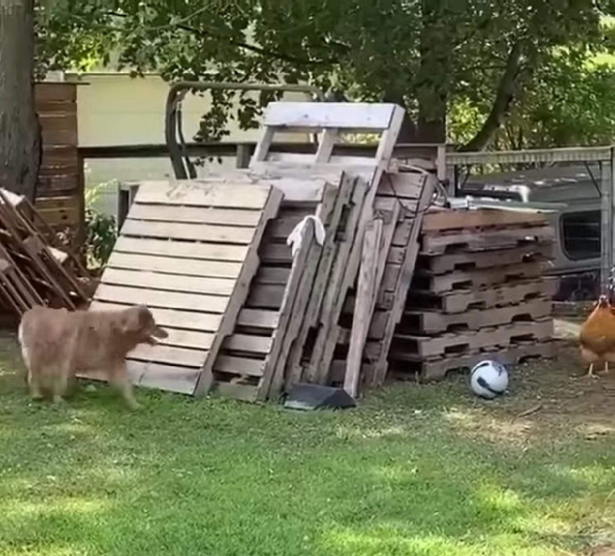 clay cucciola inseguimento veloce