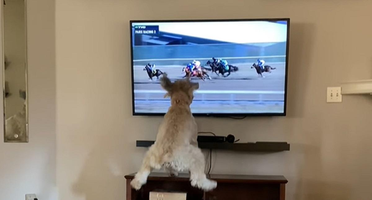 cagnolina passione cavalli