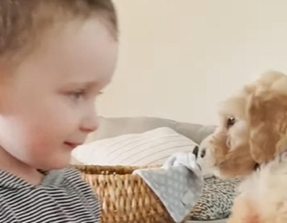 La cucciola Goldendoodle incontra i suoi fratellini umani, tutta l'emozionante scena in video