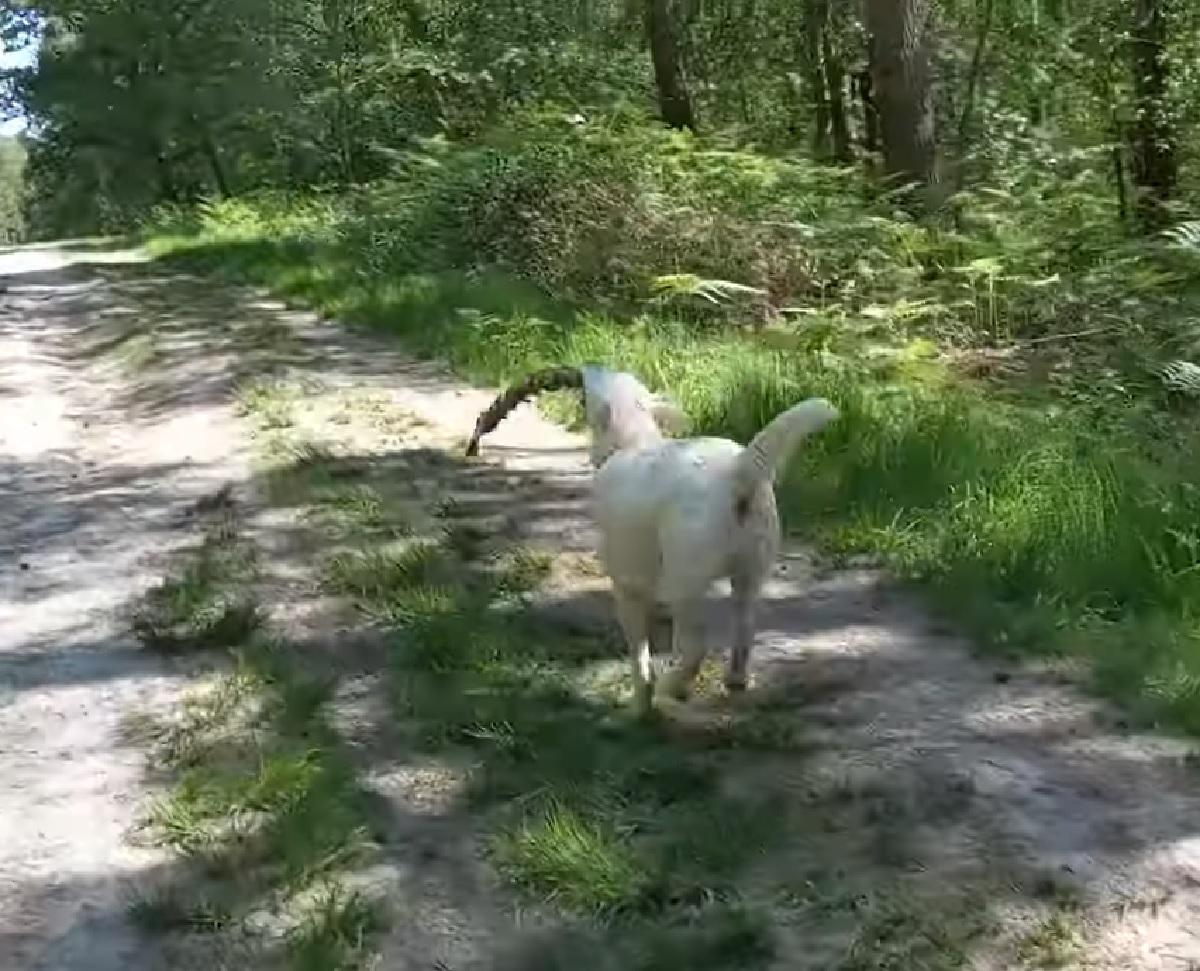 ruby cucciola labrador macabra scoperta