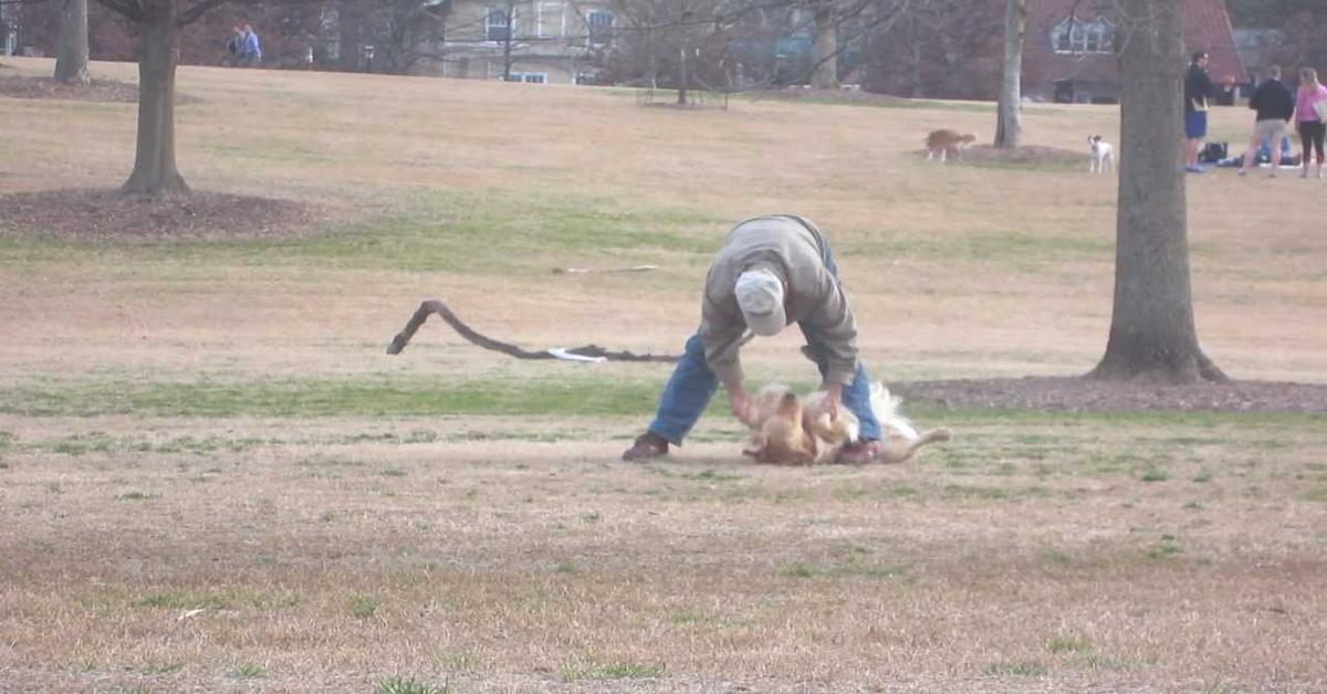 cane si finge morto per restare al parco e il padrone non riesce a farlo muovere