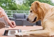 dosi di cibo per il cane