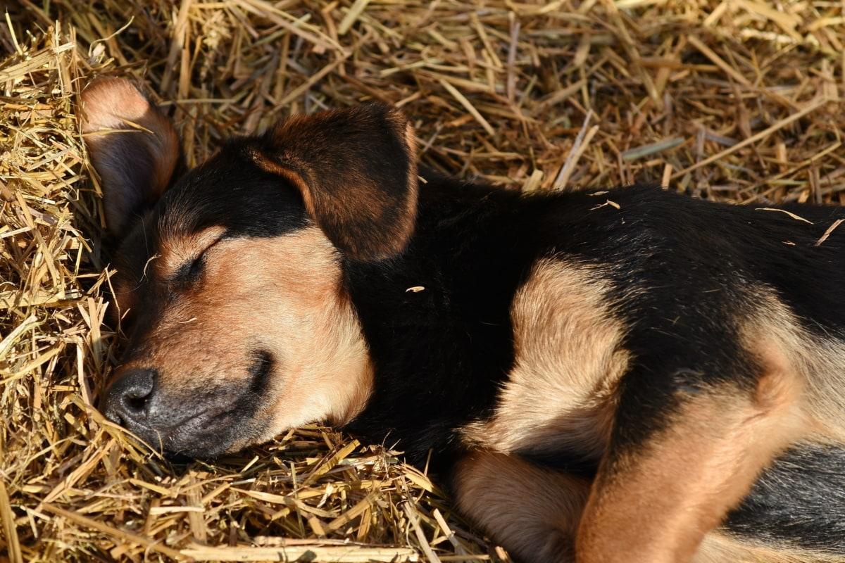Parvovirus nel cane, 8 sintomi e come trattarlo