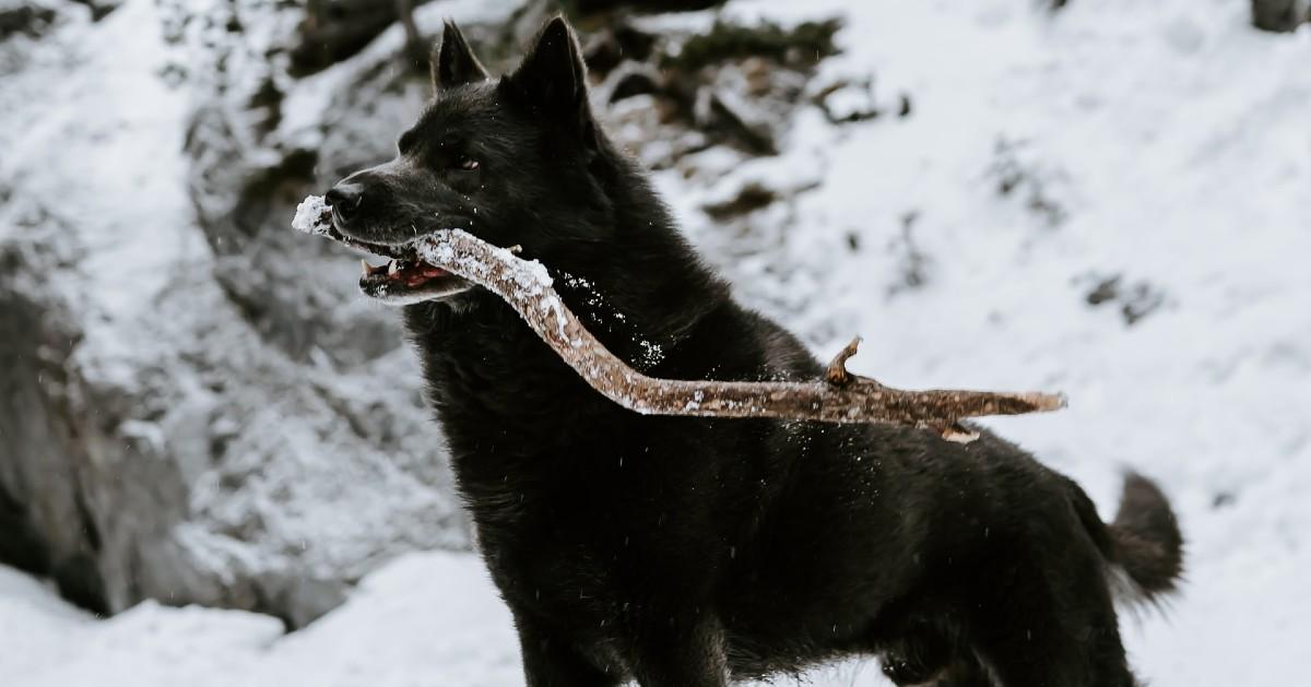cane e legno nella neve