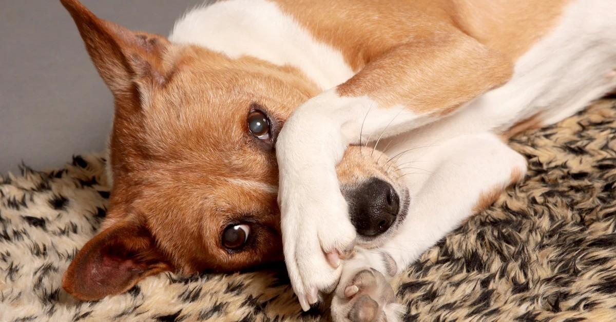 Perché i cani mangiano sul tappeto? Ecco perché scelgono di farlo