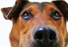 cane che guarda verso l'alto