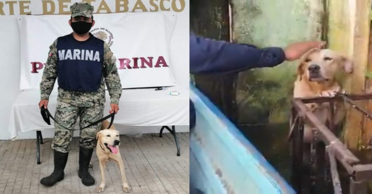 L'emozionante salvataggio di un cucciolo di cane rimasto intrappolato durante un'inondazione in messico (VIDEO)