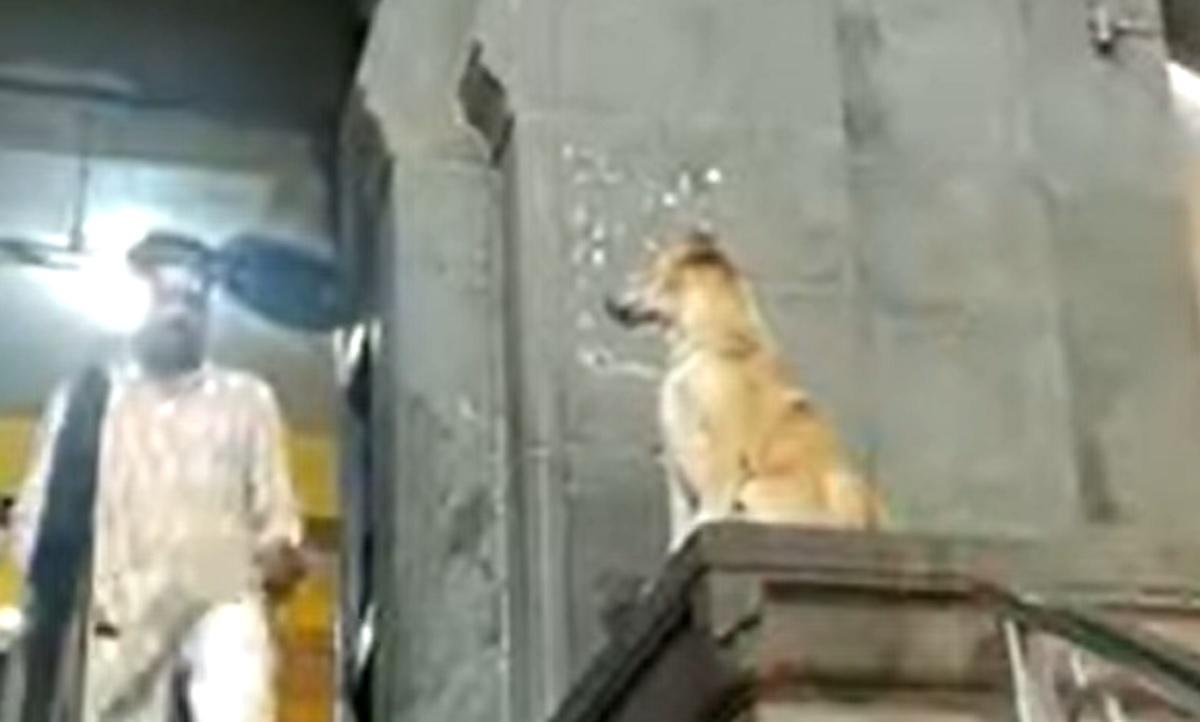 Questo cucciolo di cane saluta i passanti in modo semplicemente fantastico, il video ne è la conferma